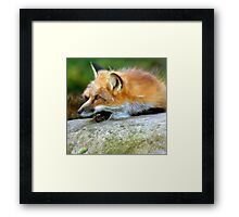 Alert & ready Framed Print
