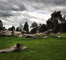 Natural Landscape - Melbourne by Joy Watson