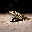 Lizard by Matt Sillence