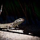 Lizard 2 by Matt Sillence
