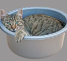 Cat in a Washing Up Bowl by simpsonvisuals