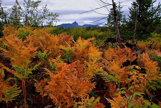 Bracken Ferns by Charles & Patricia   Harkins ~ Picture Oregon