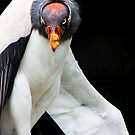 King Vulture by wendywoo1972
