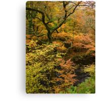 Autumn Colour by the River Teign, Dartmoor, England Canvas Print