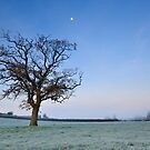 Tree and Moon at Dawn by Craig Joiner