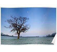 Tree and Moon at Dawn Poster