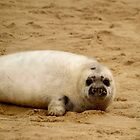 Seal Pup (Square) by George Wheelhouse