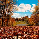 Fall Autumn Time  Orange Leaf Covered Path to Rural Graveyard w/ Cross &amp; Depth of Field by Chantal PhotoPix
