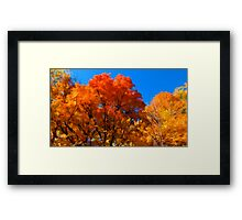 Red, Orange & Yellow Leaves on Fall Autumn Trees against a Blue Sky Framed Print