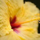 Hawaiian Hibiscus by Josh220