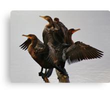 Beautiful Cormorants Canvas Print