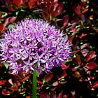 Alium and Barberry by Kenneth Keifer
