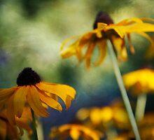 Black-eyed Susans by Lynn Starner
