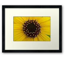 Southern Idaho Sunflower Framed Print