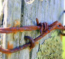 Barbed wire by Nigel Butfield