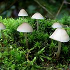 Tiny little fungi by ienemien