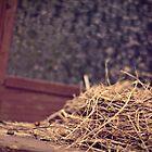 Nesting by tabbymichelle