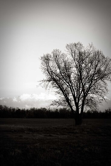 Lonely Roots by tabbymichelle