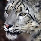 SNOW LEOPARD PORTRAIT by Charlene Aycock