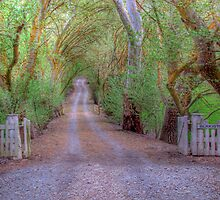 Spring has Sprung - Blakiston, The Adelaide Hills, SA by Mark Richards