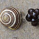 Blackberry Snail by ApeArt