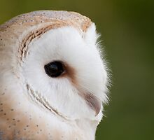 Barn Owl by Christopher Cullen