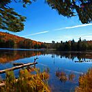 Fall Forest Scene - Autumn Lake Reflection with Floating Logs by Chantal PhotoPix