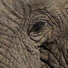 In an Elephant's Eye by John Robb