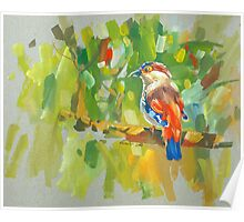 bird-o5 Poster