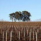 ~ Hills Vines ~ by LeeoPhotography