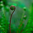Fancy Fiddlehead by Kirk Photography                      Kirk Friederich