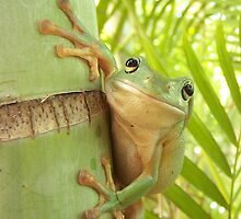 Frog Happy - Entices you to return his smile (Award Winner) by jono johnson