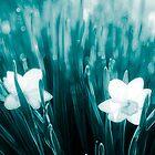 Daffodil found in Avatar by Krisztian Sipos