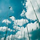 Reeds with Sky by Krisztian Sipos