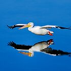 American white pelican, pelecanus erythrorhynchos by Arto Hakola