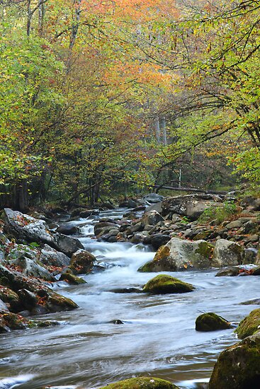 Mountain Stream by Gary L   Suddath