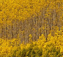 Aspen Golden Harp by Greg Summers
