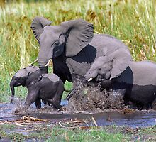 Family of elephants by leksele