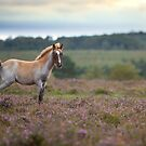 Foal on the heath by david marshall