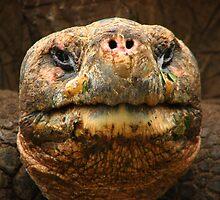 Giant tortoise by jmccabephoto