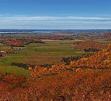 Fall Autumn Season ~ Brush & Orange Leaf Trees on a Hillside w/ Green Field, Meadow & Farmland by Chantal PhotoPix