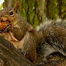 Squirrel Dinner - Don't mess with me while I'm eating... by Benjamin Brauer