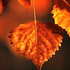 One Aspen Leaf by Gregory J Summers