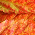 hues of autumn by lindy sherwell