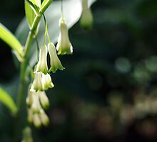 soft white bells by sago