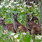 Kangaroos in the Tuart Forest by Julia Harwood