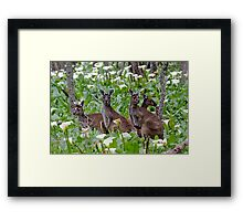 Kangaroos in the Tuart Forest Framed Print