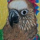 Hawk Headed Parrot by Joann Barrack
