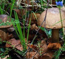Brown birch-boletus in my forest in this morning 2 by Antanas
