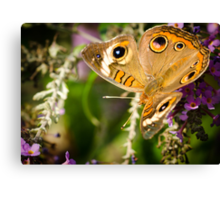 Butterfly with wings unfolded Canvas Print